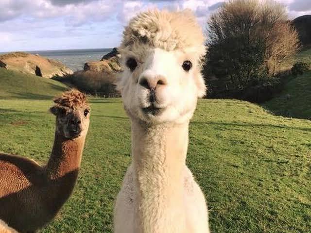 alpaca-overview